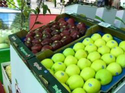 سیب  رد وگلن از ارقام تولیدی نهالستان  البرز شاهروود