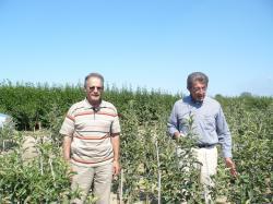 نهالستان زانزی ایتالیا سیب پایه مالینگ   سمت راست اقای زانزی بزرگترین تولید کنده نهال اروپا