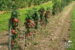 سیب گالا روی پایه  EM27